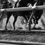 楽天競馬はポイントサイト「ポイントインカム」経由での無料登録が一番お得です